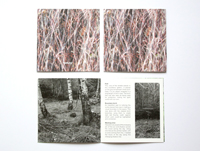 CDear betula book