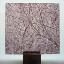 birch photograph prespex