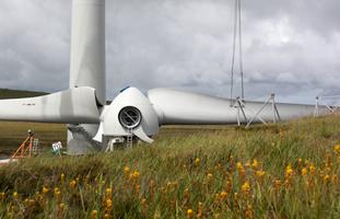 CDear windfarm1