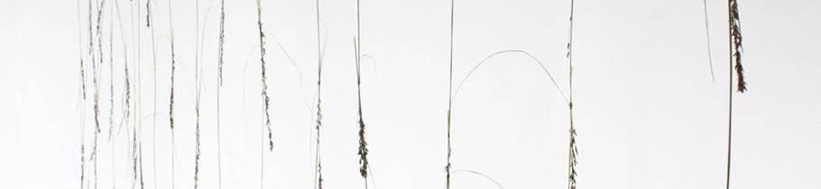 CDear grass wall2