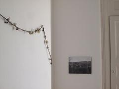 CDear dandelion timeline