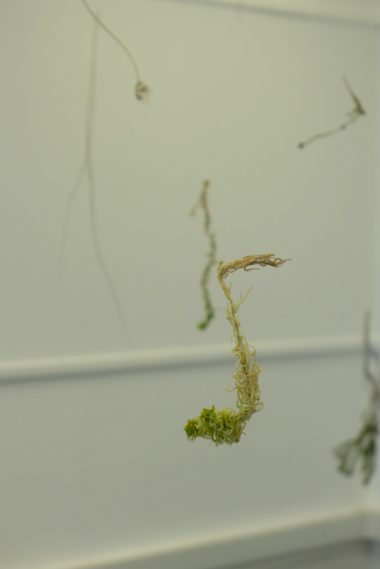 Caroline Dear - Cupar Arts Festival 2016 - step into another world - sphagnum plant structure