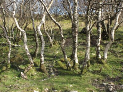 Caroline Dear - ATLAS Arts - Landline 2016 // Five Walks in Skye - Plant Line